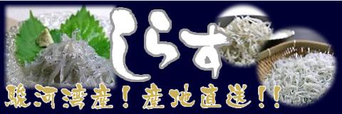 しらす 駿河湾産!産地直送!!